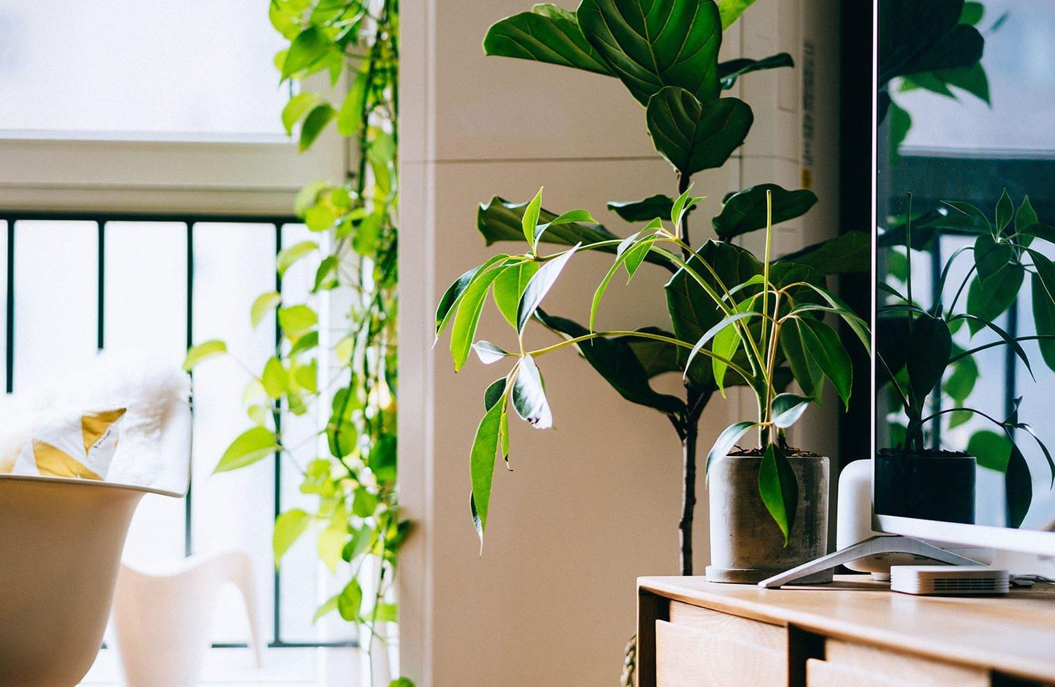 Green plant near television